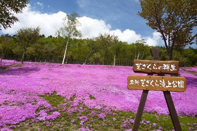 滝上芝ざくら公園