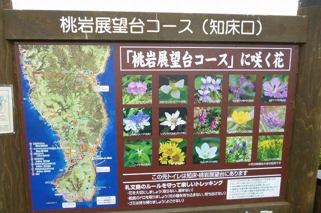 桃岩展望台コースに咲く花
